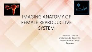 Anatomy Of Reproductive System Female Imaging Of Female Reproductive System Rv