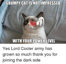 Grumpy Cat Yes Meme - 25 best memes about grumpy cat and army grumpy cat and army