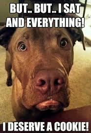 Chocolate Lab Meme - chocolate lab adorable love animals pinterest labs dog and