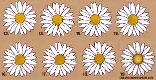 how to draw a daisy flower daisies in easy step by step drawing