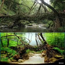 aquascape version of a living root bridge dream garden aquarium