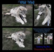 Wolf Halloween Costume 10 Wolf Costume Ideas Big Bad Wolf Costume