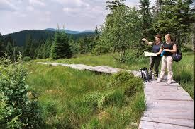 Baden Im Harz Die Moore Des Nationalparks Harz Harzer Tourismusverband E V