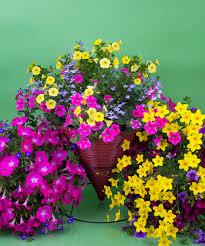 currans flowers