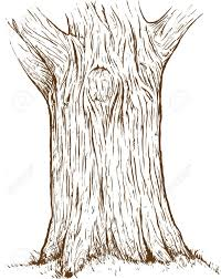 bark clipart tree trunk pencil and in color bark clipart tree trunk