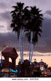 palm trees decorated with lights in the normandy isle