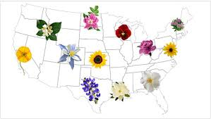 Names And Images Of Flowers - find official state flower for usa teleflora