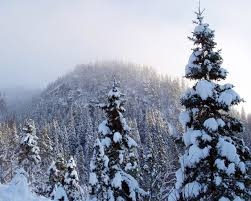 winter pretty winter nature tree snow high resolution picture for