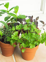 Winter Indoor Garden - indoor vegetable garden tips at womansday com winter gardening tips