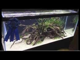 Aquascape Chicago Aquascaping Contest Winners Aquatic Experience 2015 Youtube