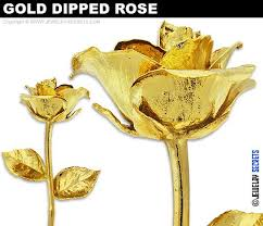 Rose Dipped In Gold 50 Best Dipping Gold In Rose Tattoo Images On Pinterest Rose