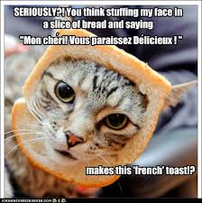 Cat Toast Meme - lolcats french toast lol at funny cat memes funny cat pictures