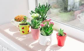 the best indoor plants the best indoor plants for your home