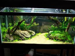 Aquascape Fish Freshwater Fish Aquarium Design