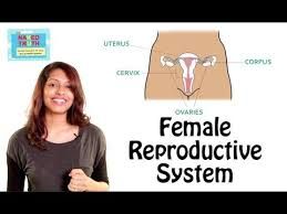 Private Parts Female Anatomy Female Reproductive System 101 In Hindi Youtube