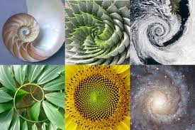 golden ratio dna spiral exponential evolution dna activation and the golden ratio wake