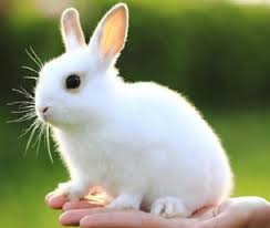 imagenes animales australia australia prohíbe las pruebas en animales para productos cosméticos