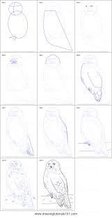 how to draw a snowy owl printable step by step drawing sheet