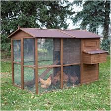 Best Chicken Coop Design Backyard Chickens by Backyards Trendy Chicken Coop Backyard Chickens Urban Eggs 53