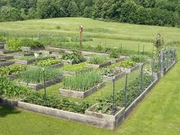 wow that is a big garden but looks managable to awesome