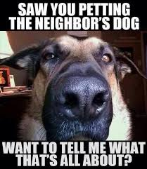 Dog Lover Meme - dog lovers get it riddle from the middle