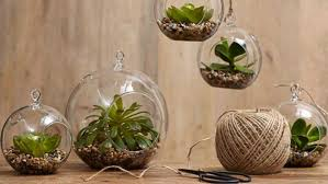 Indoor Gardening Ideas Homelife 8 Indoor Gardening Ideas