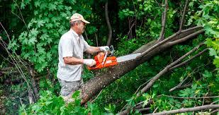 affordable tree service in brighton mi big guys tree service