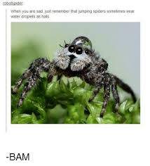 Sad Spider Meme - botspide when you are sad just remember that jumping spiders