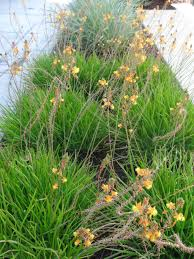 low maintenance plants tended