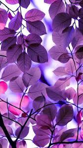imagenes whatsapp mandalas resultado de imagen de mandalas tonos morados y rosa fondos