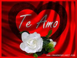 imagenes de amor con rosas animadas gif animados de amor con imagenes de rosas y frases romanticas