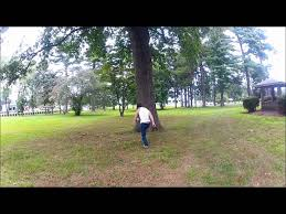 how to back flip a tree