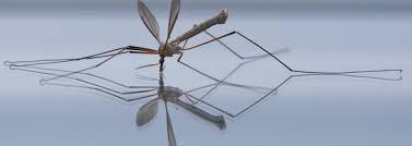 moustique dans ma chambre les anti moustiques ce qui marche et ce qui ne marche pas