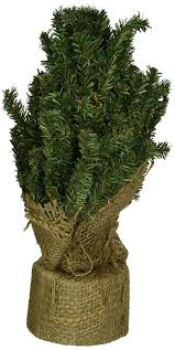 cwi gifts pine tree with burlap base 12 inch read more at the