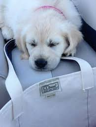 Ll Bean Dog Bed Cairo And Colbie Are Best Friends That Like To Share Their Llbean