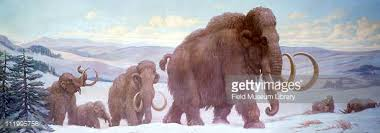 woolly mammoth stock photos pictures getty images