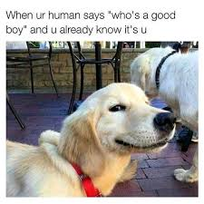 Best Dog Memes - best dog memes or anything else that has dogs