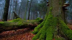 Moss Top Hdq Forest Moss Images Wallpapers Amazing Rsg98 Collection