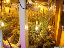 grow light position horizontal or vertical page 3