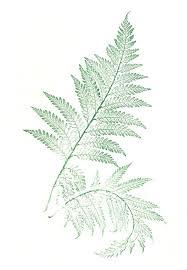 Free Picture Leaf Nature Fern Folia Ferns Leaves Free Image On Pixabay