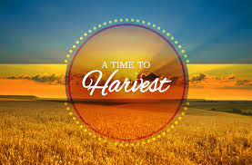 sermon harvest thanksgiving divascuisine