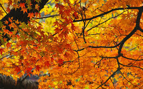 Autumn Colors How To Have The Best Fall Ever Travel Leisure