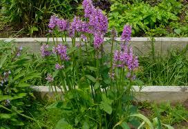 garden design garden design with explore cornell home gardening