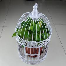 cage and aviary birds for sale picture more detailed picture