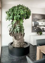 office plant office plants green offices plant container combinations shop