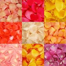 fresh petals 6000 fresh petals assorted grocery gourmet food