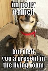 Potty Training Memes - dog potty training memes memes pics 2018