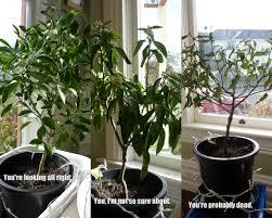 dear citrus trees we to talk garden rant