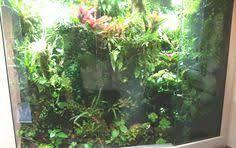 regenwaldterrarium rainforest vivarium rainforest vivarium
