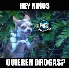 Meme Droga - quieren drogas meme subido por negrita memedroid